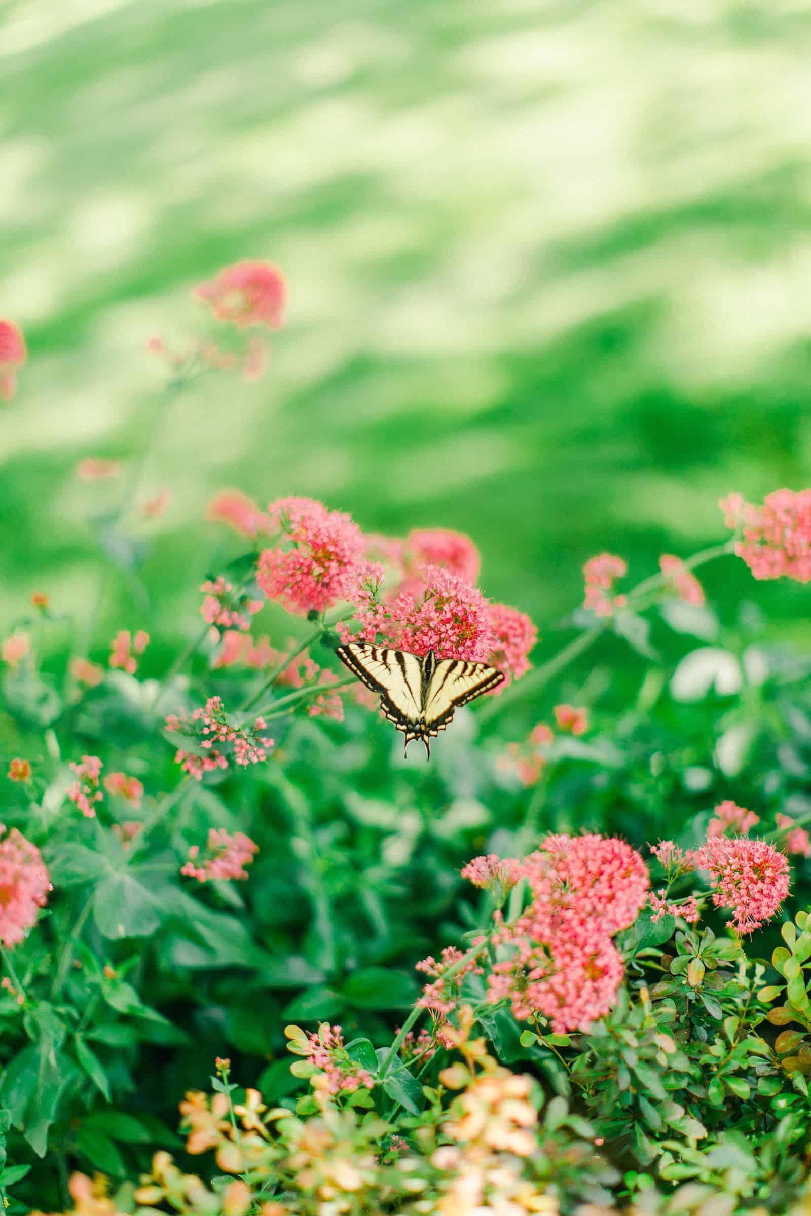 Draper LDS Temple Wedding, Utah wedding photography, summer backyard wedding, butterfly in flowers, nature photography