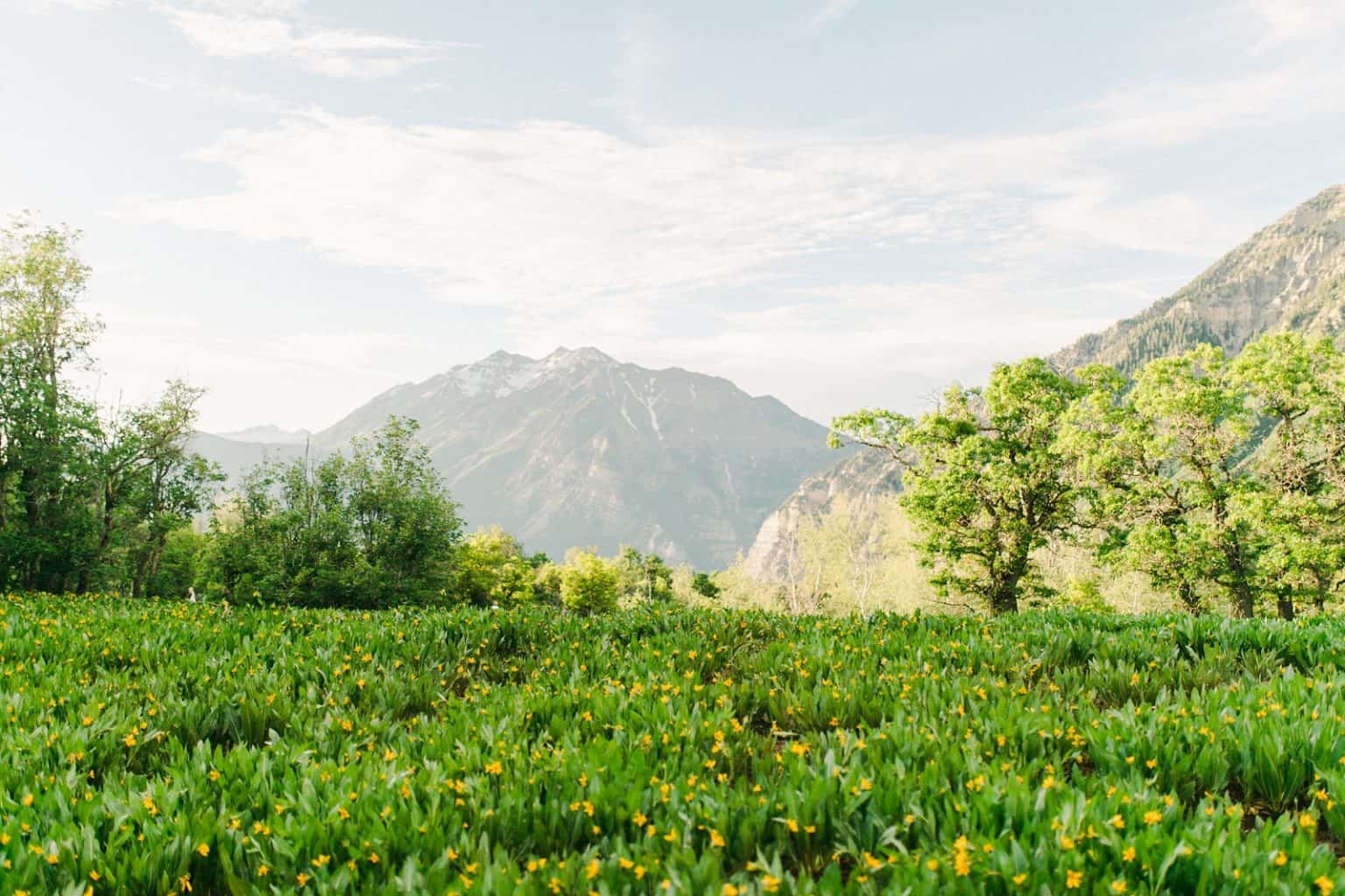Provo Canyon wildflowers field engagement session, Utah wedding photography, mountain field with yellow flowers