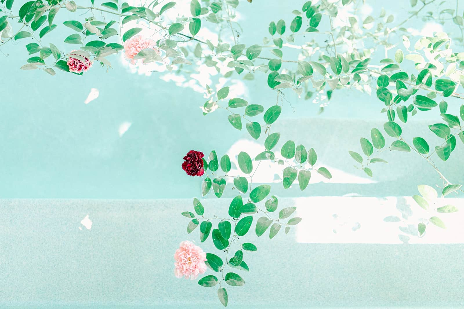 Texas pool house ceremony, floating flowers in swimming pool
